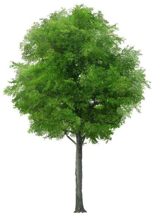 Дерево из контакта