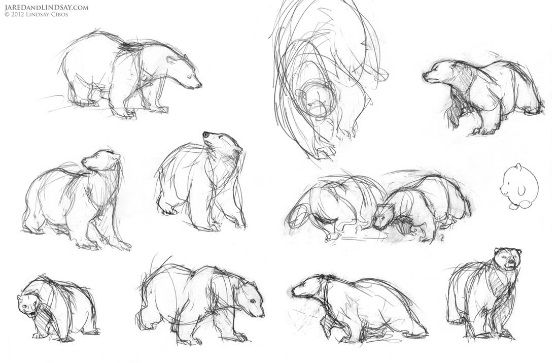 медведь, позы, скетчи, движение