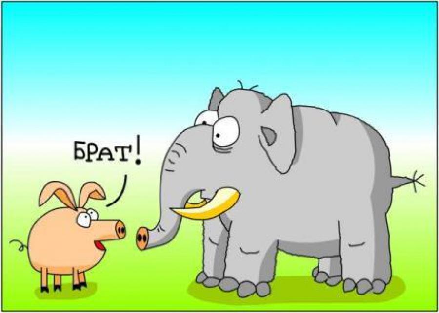 Свинюша и слоняра