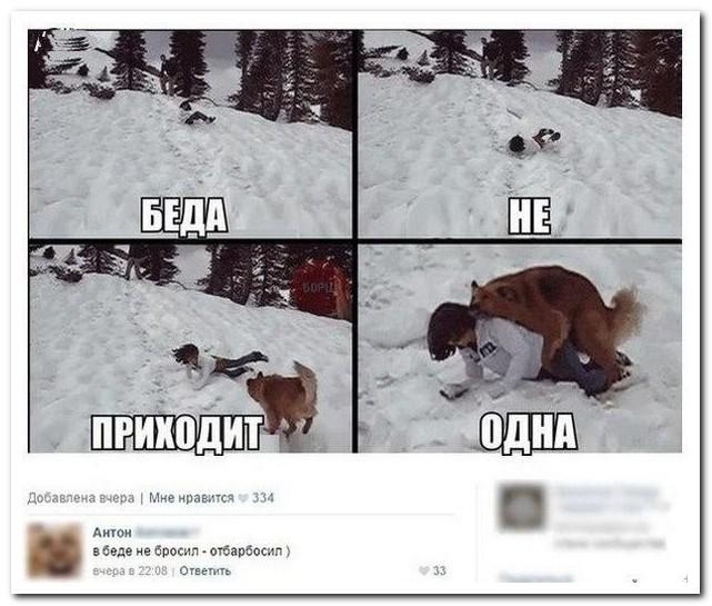 Смешно из соцсетей, отбарбосил, упал, снег, собака